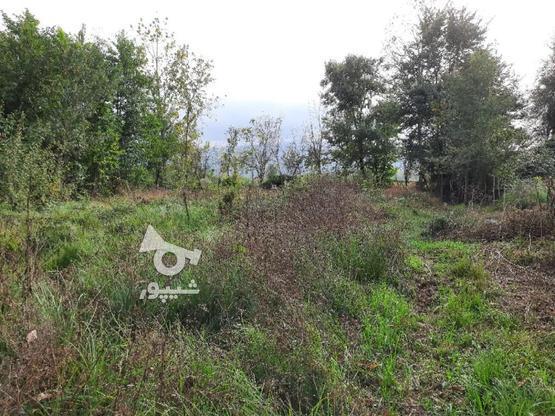 2000متر زمین مسکونی در لاهیجان در گروه خرید و فروش املاک در گیلان در شیپور-عکس2