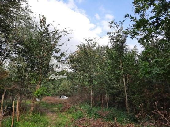 2000متر زمین مسکونی در لاهیجان در گروه خرید و فروش املاک در گیلان در شیپور-عکس1