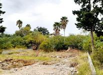 فروش زمین مسکونی 363 متر در رویان در شیپور-عکس کوچک