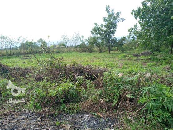 فروش زمین مسکونی 580 متر در رضوانشهر در گروه خرید و فروش املاک در گیلان در شیپور-عکس1