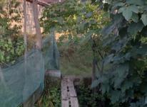 فروش زمین مسکونی 130 متر در لنگرود در شیپور-عکس کوچک