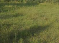 فروش زمین کشاورزی 350متر در لشت نشا در شیپور-عکس کوچک