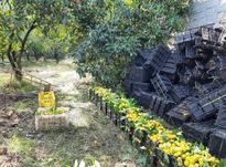 فروش زمین کشاورزی 5300 ابتدا عبور اسبوکلا تجاری و مسگونی در شیپور-عکس کوچک