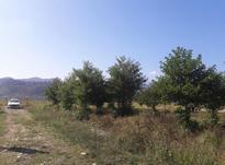 زمین مسکونی سند دار کوه پایه 470 متر در شیپور-عکس کوچک