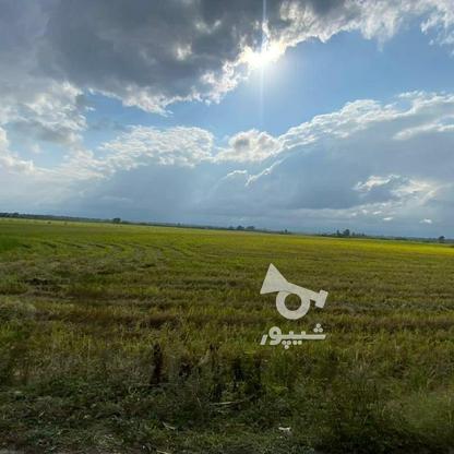 فروش زمین اقساطی محمود اباد در گروه خرید و فروش املاک در مازندران در شیپور-عکس2