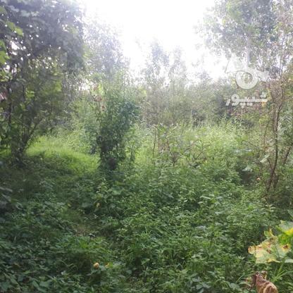 فروش زمین ساحلی مسکونی 282 متر در چاف و چمخاله در گروه خرید و فروش املاک در گیلان در شیپور-عکس1