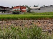 فروش زمین298 مترمحمودآباد/جنگلی/سنددار/کدرهگیری در شیپور-عکس کوچک