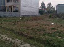 زمین 300متر آمل در شیپور-عکس کوچک