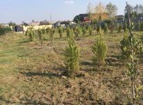 فروش زمین214 متر در محمودآباد/بابلسر در شیپور-عکس کوچک