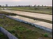 فروش زمین مسکونی 3215 متر در محمودآباد در شیپور-عکس کوچک