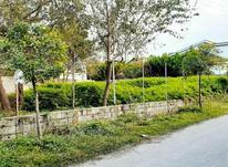 فروش زمین مسکونی 500 متر در رویان در شیپور-عکس کوچک