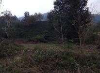 500 متر زمین مسکونی در چلک  در شیپور-عکس کوچک