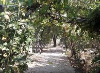 2100 متر باغ چهار دیواری دو بحر در شیپور-عکس کوچک
