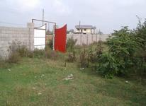 فروش فوری زمین مسکونی 8000 متری در رضوانشهر در شیپور-عکس کوچک
