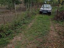 2100 متر زمین باغی در تالارپشت ،دسترسی عالی ،درختان جوان در شیپور
