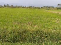 فروش زمین کشاورزی 1000 متر در آمل در شیپور