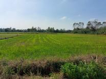 فروش زمین کشاورزی 4000 متری در جاده کلوده در شیپور