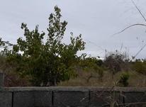 فروش زمین باغی 2700 متر در آمل در شیپور-عکس کوچک