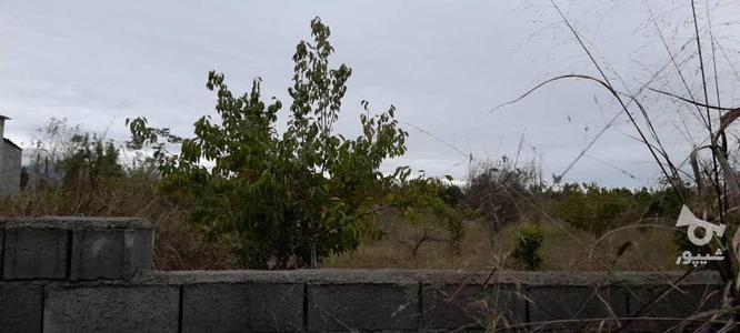 فروش زمین باغی 2700 متر در آمل در گروه خرید و فروش املاک در مازندران در شیپور-عکس1