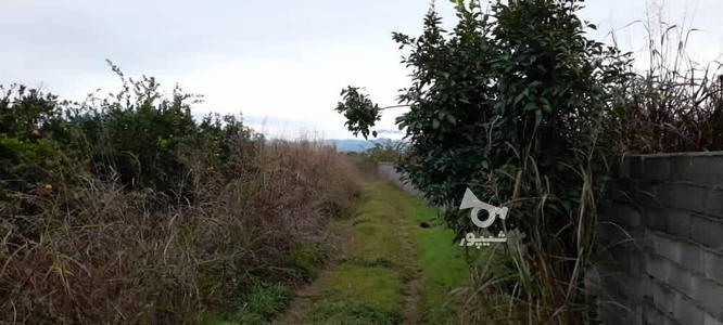 فروش زمین باغی 2700 متر در آمل در گروه خرید و فروش املاک در مازندران در شیپور-عکس4