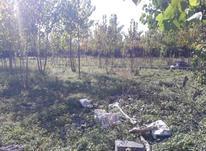 فروش زمین مسکونی 927 متر در آستانه اشرفیه در شیپور-عکس کوچک