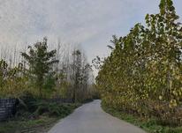2400 متر زمین مسکونی در روستای داخل  در شیپور-عکس کوچک