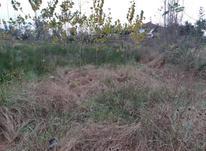 1000متر زمین با کاربری باغی منطقه مسکونی در شیپور-عکس کوچک
