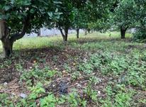 ۲۵۰مترزمین داخل بافت مسکونی باغ مرکبات در شیپور-عکس کوچک