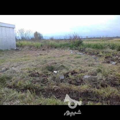 فروش زمین قابل ساخت 250 متر در تنکابن در گروه خرید و فروش املاک در مازندران در شیپور-عکس4