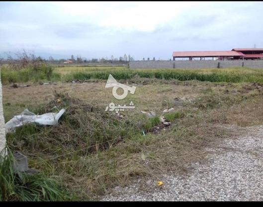 فروش زمین قابل ساخت 250 متر در تنکابن در گروه خرید و فروش املاک در مازندران در شیپور-عکس2