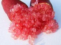 نهال نایاب لیمو ترش خاویاری قرمز در شیپور-عکس کوچک