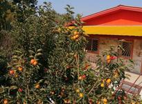 ویلا باغ 500متری محموداباد در شیپور-عکس کوچک