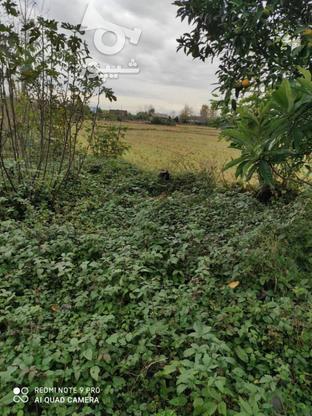 فروش زمین مسکونی 430 متر در خشکبیجار در گروه خرید و فروش املاک در گیلان در شیپور-عکس1