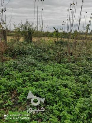 فروش زمین مسکونی 430 متر در خشکبیجار در گروه خرید و فروش املاک در گیلان در شیپور-عکس5