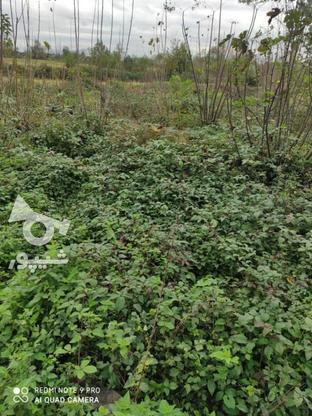فروش زمین مسکونی 430 متر در خشکبیجار در گروه خرید و فروش املاک در گیلان در شیپور-عکس4