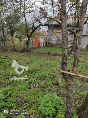 فروش زمین مسکونی 430 متر در خشکبیجار در گروه خرید و فروش املاک در گیلان در شیپور-عکس3