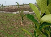 با سلام فروش زمین باغی در جاده بابل به بهنمیر 300 متر در شیپور-عکس کوچک