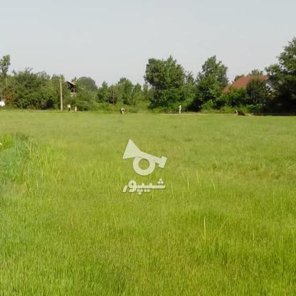 فروش زمین مسکونی 4780 متر در آستانه اشرفیه در گروه خرید و فروش املاک در گیلان در شیپور-عکس6