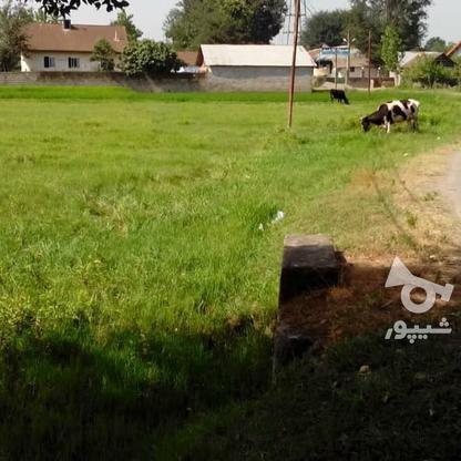 فروش زمین مسکونی 4780 متر در آستانه اشرفیه در گروه خرید و فروش املاک در گیلان در شیپور-عکس2