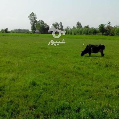 فروش زمین مسکونی 4780 متر در آستانه اشرفیه در گروه خرید و فروش املاک در گیلان در شیپور-عکس4