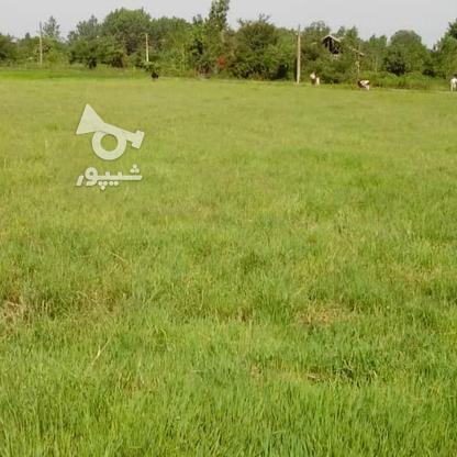 فروش زمین مسکونی 4780 متر در آستانه اشرفیه در گروه خرید و فروش املاک در گیلان در شیپور-عکس5