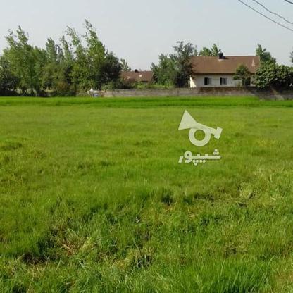 فروش زمین مسکونی 4780 متر در آستانه اشرفیه در گروه خرید و فروش املاک در گیلان در شیپور-عکس3