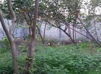 فروش ویژه زمین باغی 1500 متر در آمل در شیپور-عکس کوچک