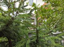 ویلا تریبلکس قیمت مناسب در تنکابن در شیپور-عکس کوچک