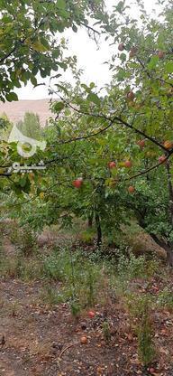 فروش باغ با مجوز ساخت و سند تک برگ در گروه خرید و فروش املاک در تهران در شیپور-عکس3