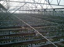 فروش گلخانه صنعتی در صفادشت در شیپور-عکس کوچک