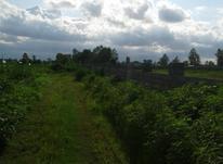 فروش زمین کشاورزی 1300 متر در چاف و چمخاله در شیپور-عکس کوچک