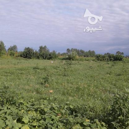 فروش زمین کشاورزی 1300 متر در چاف و چمخاله در گروه خرید و فروش املاک در گیلان در شیپور-عکس2
