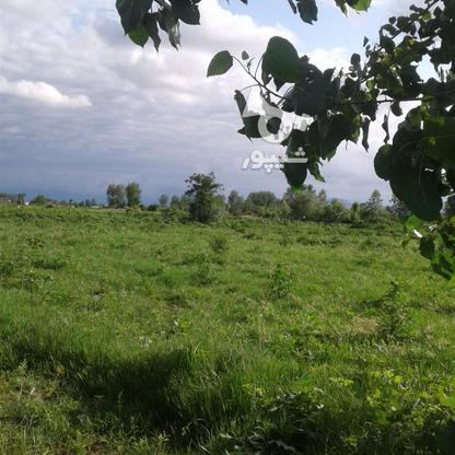 فروش زمین کشاورزی 1300 متر در چاف و چمخاله در گروه خرید و فروش املاک در گیلان در شیپور-عکس6