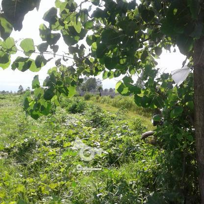 فروش زمین کشاورزی 1300 متر در چاف و چمخاله در گروه خرید و فروش املاک در گیلان در شیپور-عکس5